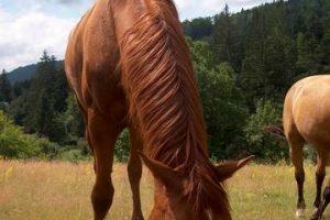 11_prenajom_koni