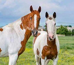 Kone v našej stajni fotogalérie
