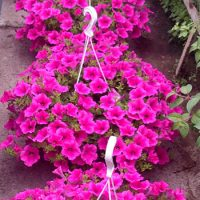 kvety01