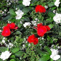 kvety06