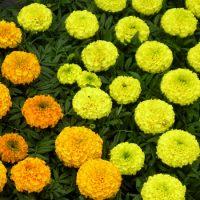 kvety07