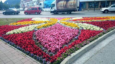 kvety11