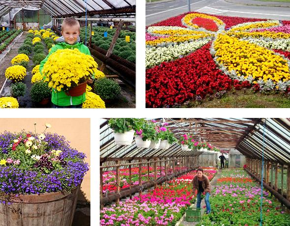 zahradnictvo-collage